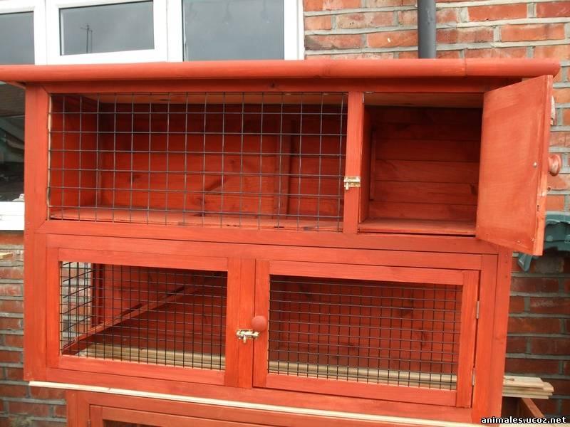 Разведение кроликов в домашних условиях клетки для кроликов